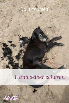 DIY Hund selber scheren: Wie du deinem Hund selbst eine neue Frisur verpasst: Hundeschermaschine und der Umgang damit.