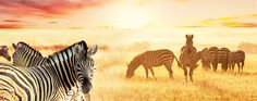The Plains of Africa: Kenya Wildlife Safari - 14 days with Collette Vacations