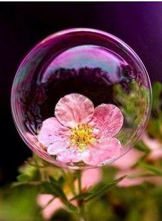 Linda flor rosada dentro de una burbuja   Pretty pink flower inside of a bubble