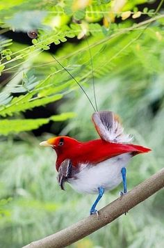 Mother Nature - birds                                                       …