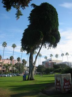 La Jolla- i love it here! can't wait to get back! La Jolla, Cant Wait, Golf Courses, How To Get, Canning, My Love, Home Canning