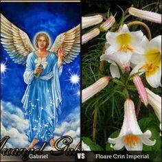 Cei sapte Arhangheli Îngerii sunt adesea împărtiti în grupuri, numite ierarhie. Arhanghelii actionează ca mesageri în serviciul l...