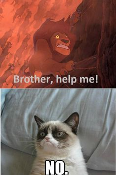 lion king grumpy cat funny disney - I hate this part but this is kind of funny... :3