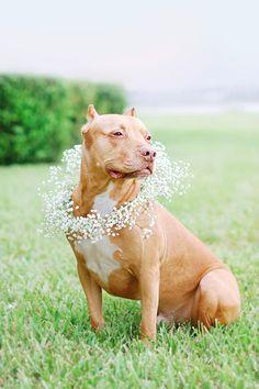 DIY: Floral Dog Wedding Wreath | Pretty Fluffy | www.prettyfluffy.com