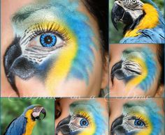 Blue Macaw.. this is amazing