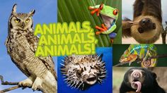 Get photos, facts, games, and videos about all types of animals!