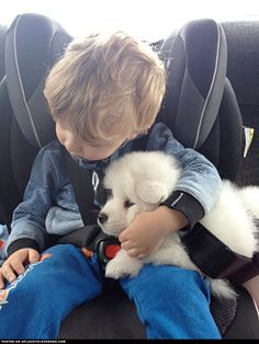aplacetolovedogs:   Adorable Samoyed puppy Zelda got scared on the drive home and the little boy comforted her… Gwenhyvar Visit our poster store Rover99.com   Sweet