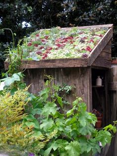 Green roof for shed