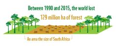 Between 1990 and 2015, the world lost some 129 million ha of forest, an area the size of South Africa