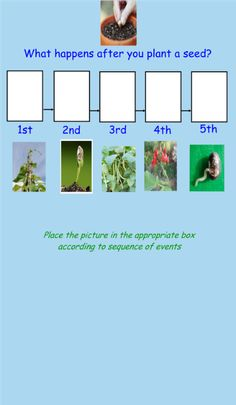 Smart Board Lesson & activities to use when teaching about Plants