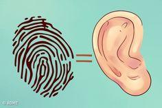 Давно доказано, что между определенными точками нанашем теле ивнутренними органами существует неврологическая связь. Это означает, что спомощью таких точек мыможем узнать много интересного онашем организме. Сегодня AdMe.ru собрал для вас занимательную информацию очеловеческих ушах, которая поможет вам нетолько больше узнать осебе исостоянии своего здоровья, ноипредсказать возможные будущие проблемы сним.