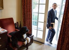 November 6, 2013 | Bo is waiting in the Outer Oval Office as the President arrives to start his day by Pete Souza.