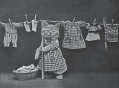 Harry Whittier Frees - father of the LOL cat!