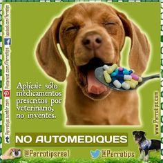 No improvises la medicación de tu mascota.  #perrotips
