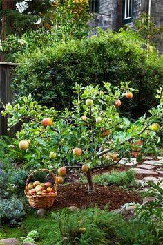 果樹を植えるのも素敵ですね。日当たりと、根の張り具合を考えて、充分にスペースをとってあげましょう。