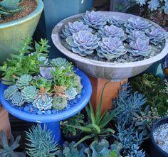 Succulents in bird bath garden-creations Succulent Gardening, Planting Succulents, Container Gardening, Planting Flowers, Container Plants, Succulent Ideas, Container Flowers, Vegetable Gardening, Gardening Tips