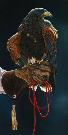 399 Amazing animal images | Birds of prey, Wild animals