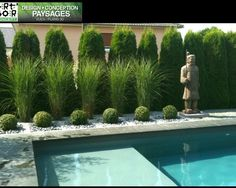 Pool Pampas Grass Design, Pictures, Remodel, Decor and Ideas - Sandy Martin Hudgins - Decor Design grass Hudgins Ideas Martin Pampas Pictures pool Remodel Sandy Boxwood Landscaping, Privacy Landscaping, Backyard Pool Landscaping, Backyard Plants, Backyard Privacy, Pool Fence, Backyard Fences, Modern Landscaping, Landscaping Design