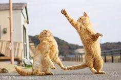 Cat Photographer Hisakata Hiroyuki Captures Photos Of Ninja Cats In Action!
