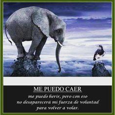 #reflexiones #motivacion #exito #emprendimiento #emprendedoresvenezolanos #emprendedores