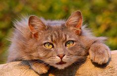 Éloigner les chats, 10 trucs et répulsif naturels pour éloigner les chats des voisins!