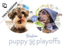 PureWow's Puppy Playoffs Competition  LOVES OF MY LIFE! (On the left!)
