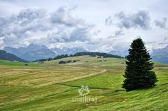 Na pięknym Alpe di Siusi, Dolomity