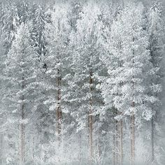 Cant believe I would pin this too Love pretty sick of winter-Olli Kekäläinen