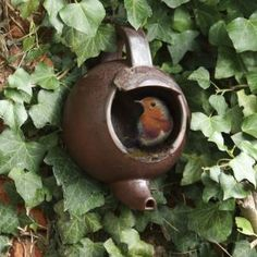 Teapot nester for small birds with handy hole for hanging up on your garden wall. This teapot nester is a quirky way of providing a nesting site for small birds, as they prefer open nesting sites. Diy Garden, Dream Garden, Garden Web, Balcony Garden, Outdoor Projects, Garden Projects, Outdoor Decor, Diy Projects, Bird Houses Diy