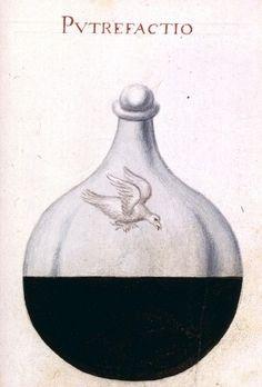 """Putrefactio - Illustration d'alchimie extraite de """"Sapientia veterum philosophorum,   sive doctrina eorumdem de summa et universali medicina""""."""