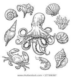 Set Sea Shell, Coral, Crab, Shrimp And Octopus. Stock Vector - Illustration of mollusks, ocean: 85981668 Shell Tattoos, Ocean Tattoos, Octopus Tattoos, Flower Tattoos, Nautical Tattoos, Turtle Tattoos, Mermaid Tattoos, Vintage Blume Tattoo, Vintage Flower Tattoo