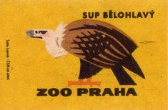Prague Zoo: vulture  1963. czechoslovakia. matchbox label. print. ephemera
