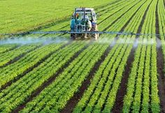 Is Monsanto's Roundup Killing Our Soil?   Our most widely used herbicide is draining the life from the earth.