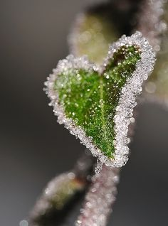 Crystalline heart leaf-nature's canvas of beauty