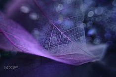 Transparent #1 by Shihya Kowatari on 500px