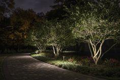 Lighting Small Trees - Sidera® Landscape Lighting