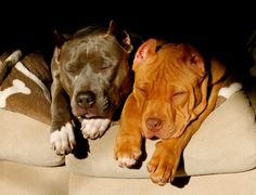 Go to www.pitfriendzy.com to post pics of your pitbull