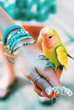 Pretty Bird | Pura Vida Bracelets