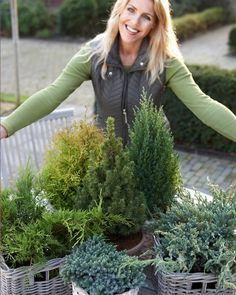 Pflanzenfreude mit Nadelbäumen im Winter. #nadelbäume #pflanzenfreude #pflanzen #plants #conifer #garten #garden #winter