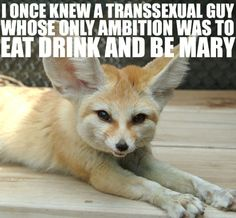 10 Fennec Foxes with George Carlin quotes