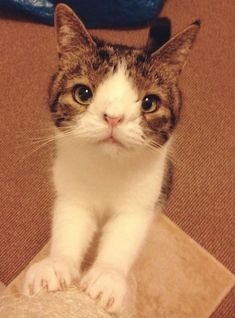 This Cat May Look Unusual but You'll Fall in Love the Minute You Meet Him.