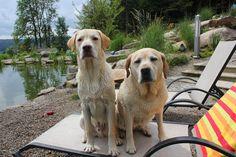 Eingezäunter Bade- & Schwimmteich. Tierischer Urlaub im Bayerischen Wald (c) Natur-Hunde-Hotel Bergfried