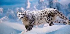 José Luis y el leopardo de las nieves | Cultura | EL PAÍS