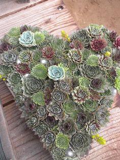 Gorgeous succulent arrangement!