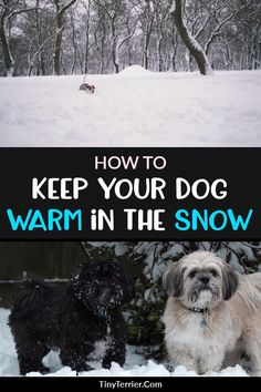 Keep your dog warm and safe in the snow with these cold weather pet care tips. Winter can be a dangerous time for pets as the temperatures drops and snow starts falling. Discover top winter pet care tips and how to keep your dog warm in the snow. Dog Health Tips, Dog Health Care, Puppy Care, Dog Care, Dog Illnesses, Cat Care Tips, Snow Dogs, Pet Life, Dog Agility
