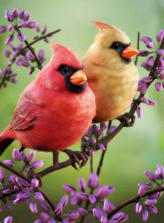"""Blow 3 kisses before a cardinal flies away and your wish will come true.  """"Granny Andrews"""""""