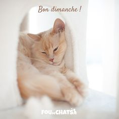 Cute Cats And Kittens, New Instagram, Shout Out, Pets, Facebook, Cat Love, Bonheur, I Love Cats, Animaux