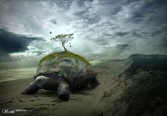 Turtle Island by Ratbar Steward -Illustration of the Iroquois Creation Story with Turtle island and the Tree of Life.