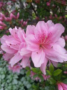 Spring Flowers and Wedding Arrangements