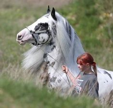 Splash or Sabino Overo (?) Gypsy horse with child Most Beautiful Animals, Beautiful Horses, Beautiful Creatures, Majestic Horse, Majestic Animals, Horse Photos, Horse Pictures, All The Pretty Horses, Draft Horses